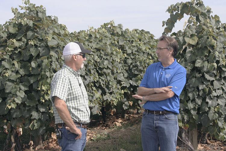 Juice grape grower Art den Hoed and Chris Voigt, executive director of the Washington Potato Commission, chat in between filming of an episode of